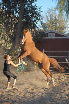 DWP FREE HORSE STOCK 317
