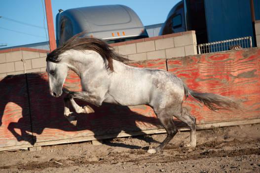 DWP FREE HORSE STOCK 407