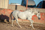DWP FREE HORSE STOCK 425