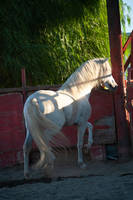 DWP FREE HORSE STOCK 445 by DancesWithPonies