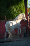 DWP FREE HORSE STOCK 445