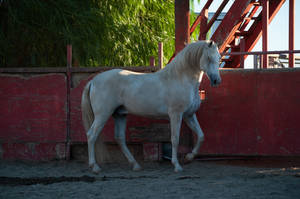 DWP FREE HORSE STOCK 446 by DancesWithPonies