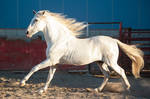 DWP FREE HORSE STOCK 452