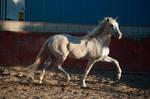 DWP FREE HORSE STOCK 455