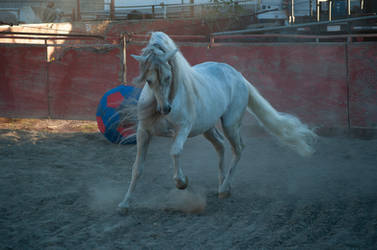 DWP FREE HORSE STOCK 476
