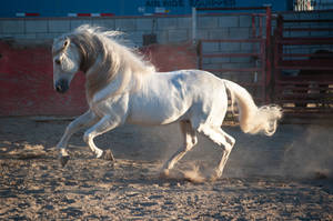 DWP FREE HORSE STOCK 477 by DancesWithPonies