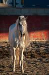 DWP FREE HORSE STOCK 495