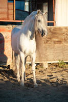 DWP FREE HORSE STOCK 506 by DancesWithPonies