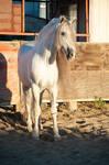 DWP FREE HORSE STOCK 506