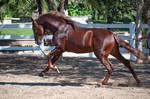 DWP FREE HORSE STOCK 526