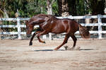 DWP FREE HORSE STOCK 529