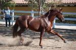 DWP FREE HORSE STOCK 533