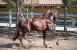DWP FREE HORSE STOCK 534