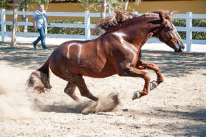DWP FREE HORSE STOCK 541