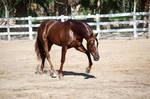 DWP FREE HORSE STOCK 553