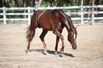 DWP FREE HORSE STOCK 554
