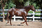 DWP FREE HORSE STOCK 561