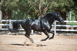 DWP FREE HORSE STOCK 591 by DancesWithPonies