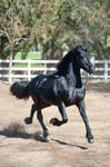 DWP FREE HORSE STOCK 615