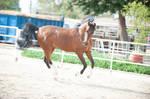 DWP FREE HORSE STOCK 607