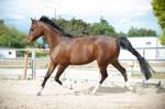 DWP FREE HORSE STOCK 614