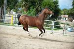 DWP FREE HORSE STOCK 618