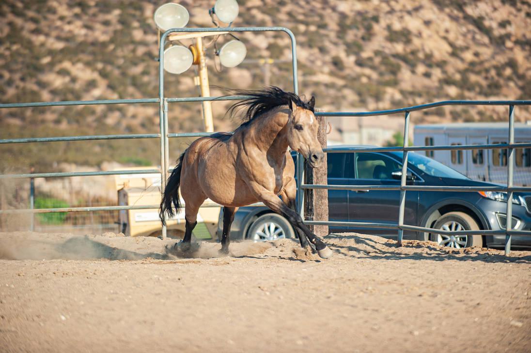 DWP FREE HORSE STOCK 638