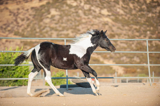 DWP FREE HORSE STOCK 677