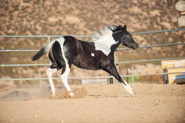 DWP FREE HORSE STOCK 679
