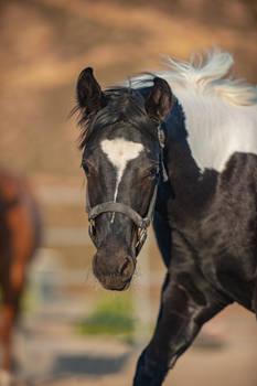 DWP FREE HORSE STOCK 685