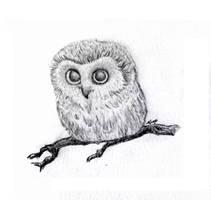 Mini Owl by skoppio