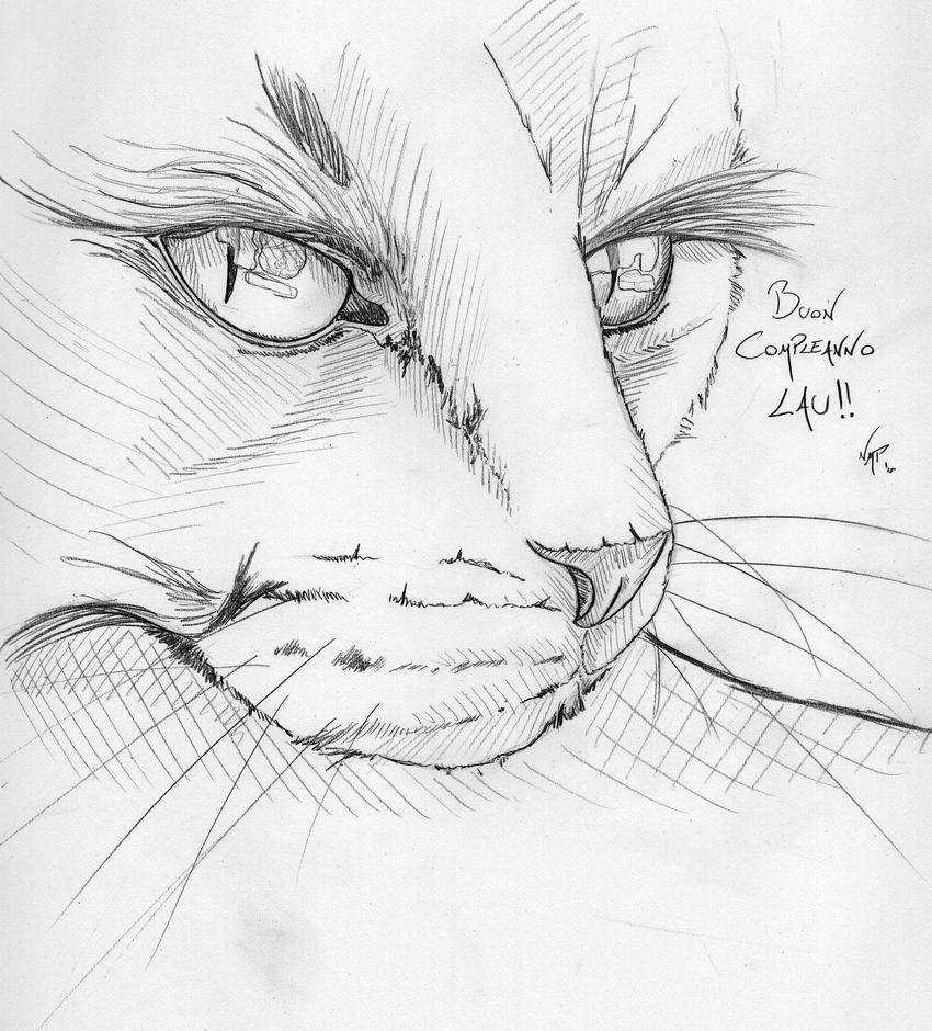 Birthday cat by skoppio