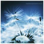 dandelion01 by impatienss