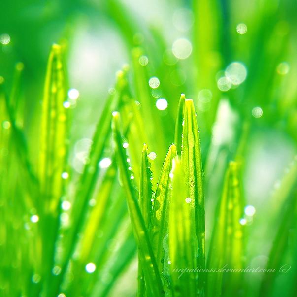 green by impatienss
