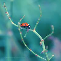 ladybird by impatienss