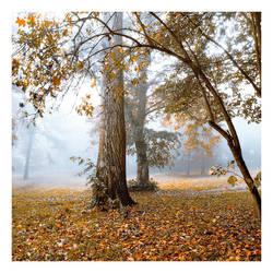 mist by impatienss