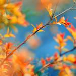 colourful...