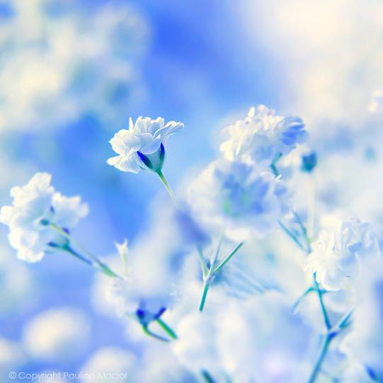 Just Like Heaven by impatienss