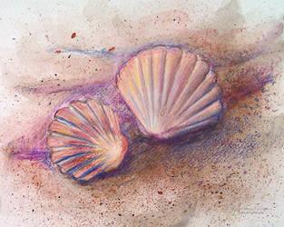Seashells by NelEilis