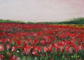 Tulip field by NelEilis