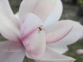 Spider and Magnolia 1 by NelEilis