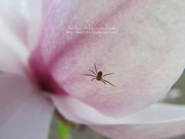 Spider and Magnolia 2 by NelEilis