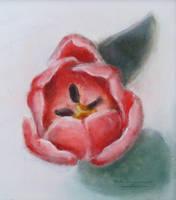 Tulip by NelEilis