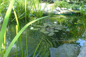 Pond by NelEilis