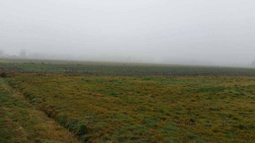 Misty morning . 6 by Grendelkin