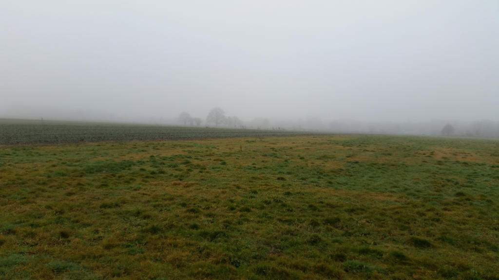 Misty morning . 7 by Grendelkin