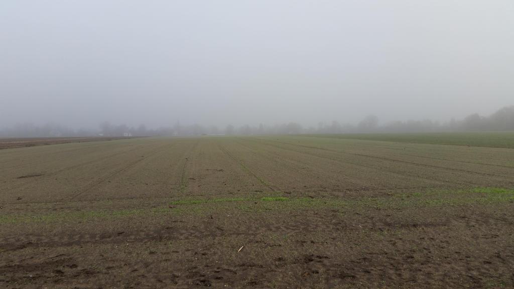 Misty morning . 8 by Grendelkin