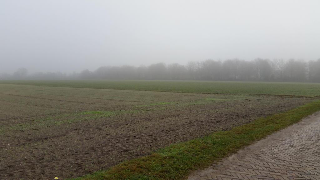 Misty morning . 9 by Grendelkin