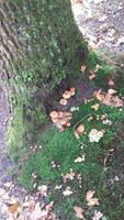 A slice of autumn . 3 by Grendelkin
