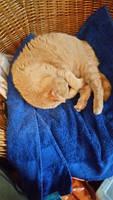 Kitty Precious by Grendelkin
